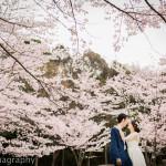 思い出の場所桜満開の中洋装ロケーション前撮り
